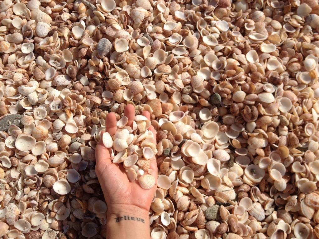 shell-beach-st-barths