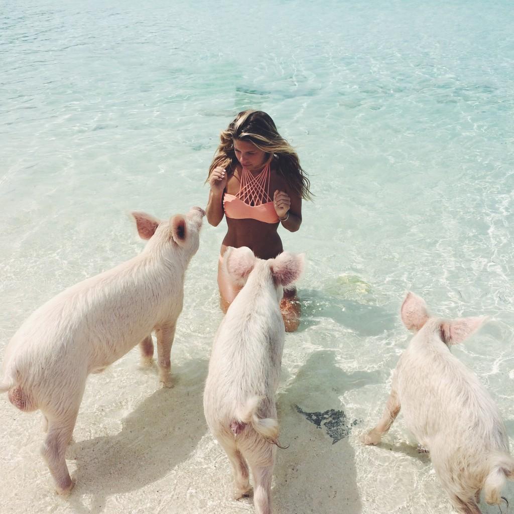 Travel Inspiration Pig Island Exuma Bahamas Glitter Amp Mud