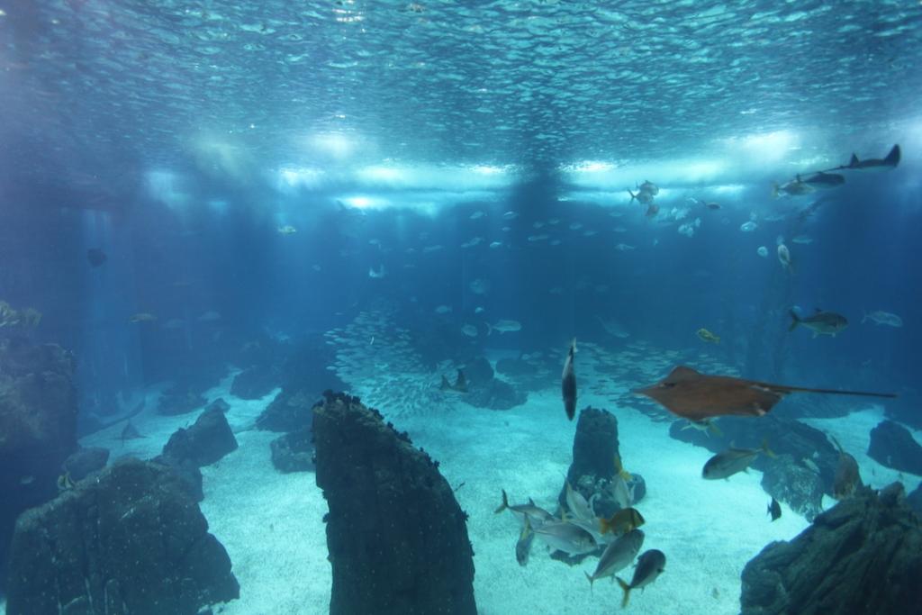 lisbon-aquarium 4