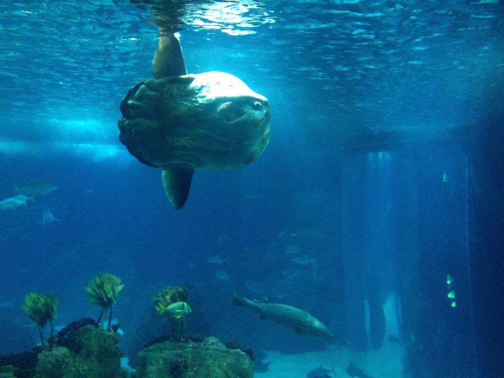 sunfish-lisbon-aquarium