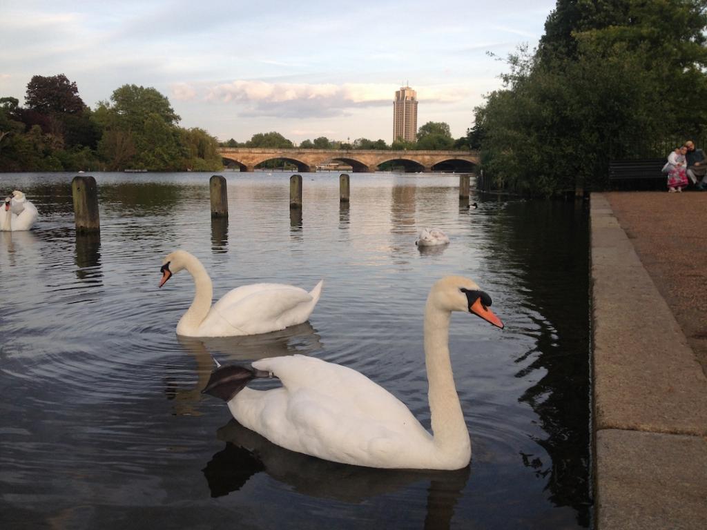 Swan-Serpentine-Hyde-Park