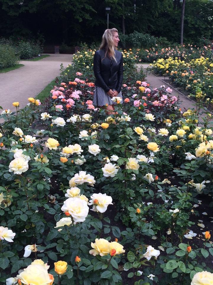 Szczecin-Rose-Garden