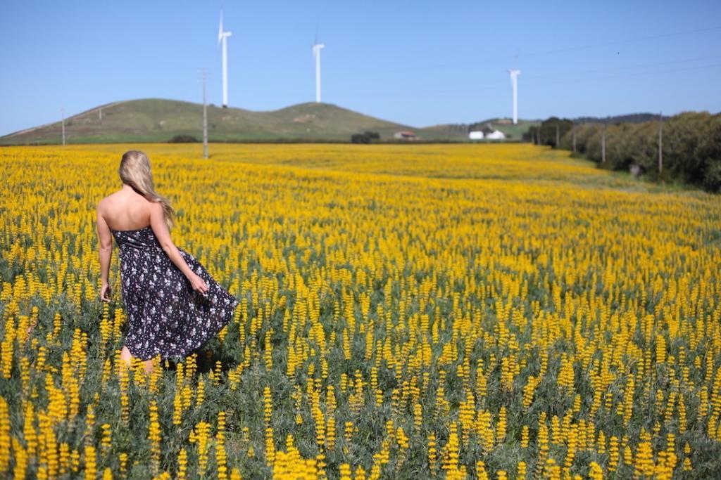 Vanessa-Rivers-Algarve-Yellow-Flowers