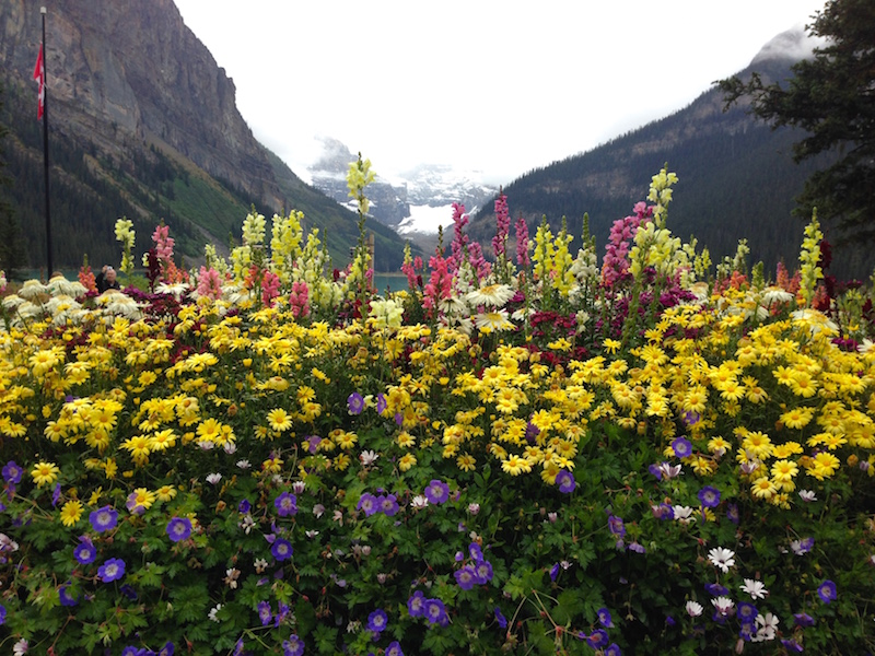 flowers-chateau-lake-louise-canada