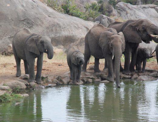 elephants-four-seasons-serengeti