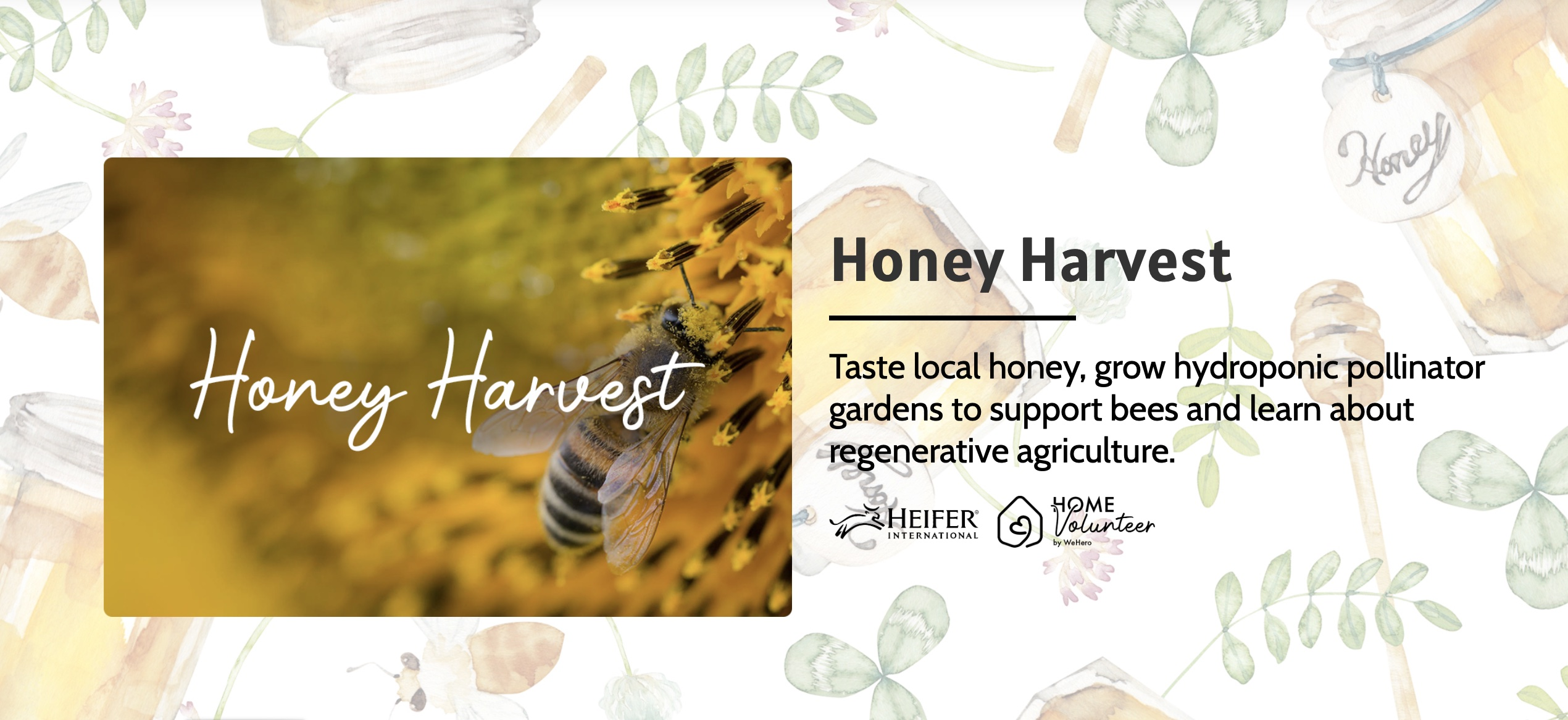 Home Volunteer Honey Harvest