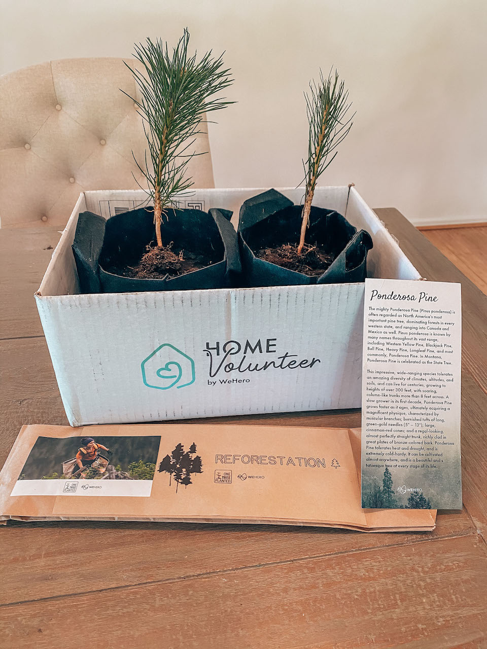 Home Volunteer Reforestation Project