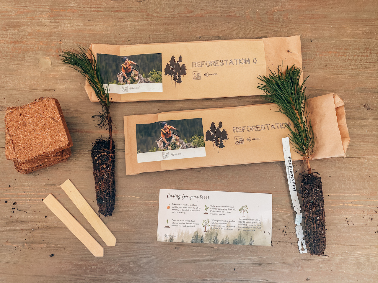 Home Volunteer Reforestation Kit